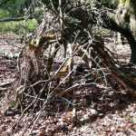 Building a den in the woods