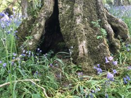 Liminal Leadership and the Bluebell Wood
