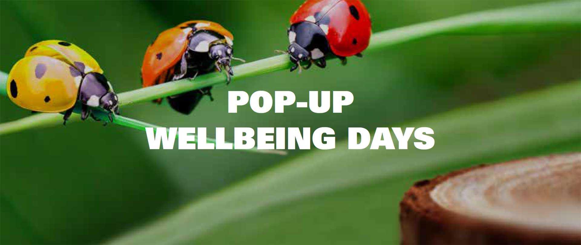 Pop up wellbeing days